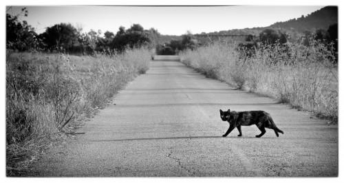 CAT  from HARA