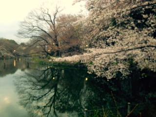 お花見〜 from MAA
